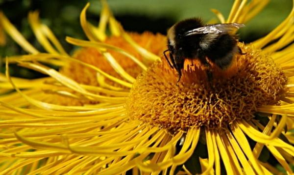 Busy Bee by catmandu