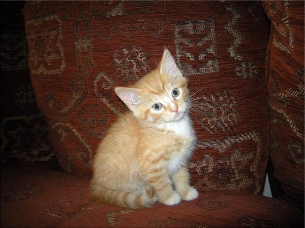 Garfield....... by thorn