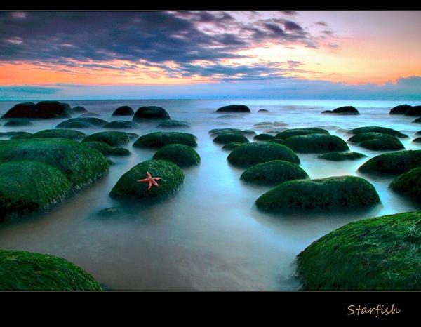 Starfish by grezmel