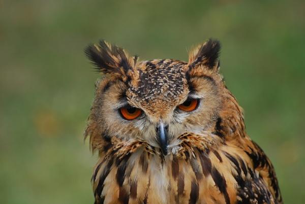 Owl by AlistairJ