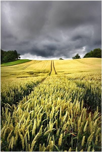 Shropshire Gold by bobalot