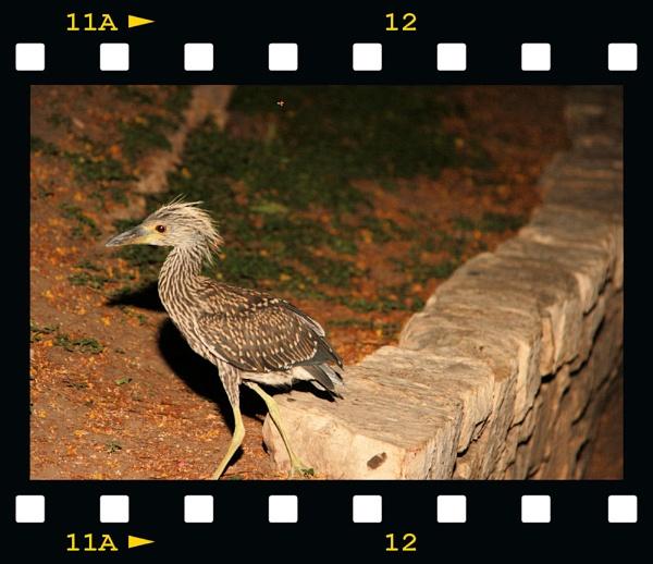 Midnight stroll by chuckspics
