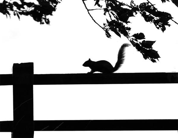 Squirrel by LindaSilcock