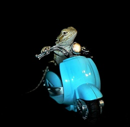Funky Moped