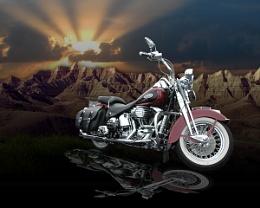 Harley #9