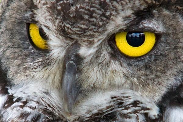 Owl of Some Sort by pj.morley