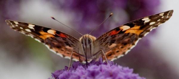 Say nectar by mikaela4