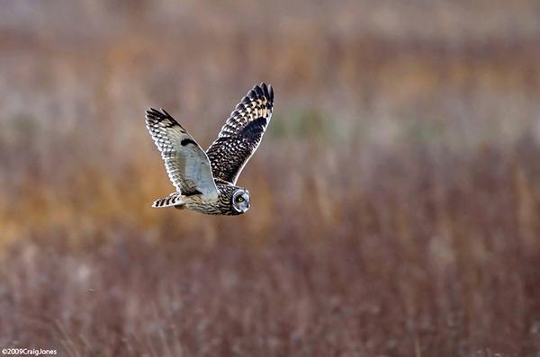 Hunting At Dusk by CraigJones