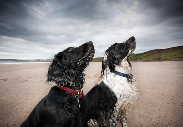 After the beach by Steve Cribbin