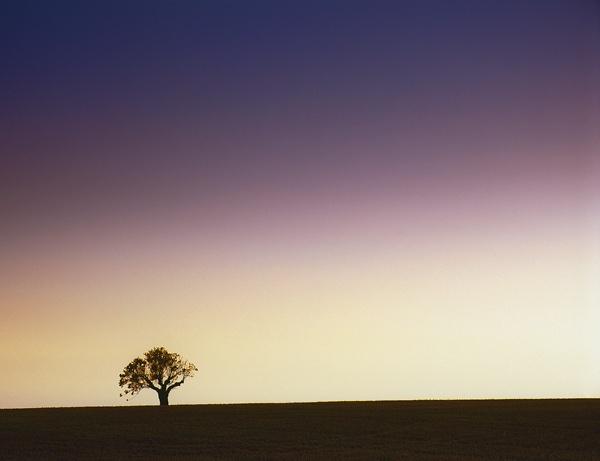 Lonesome Oak by hwatt