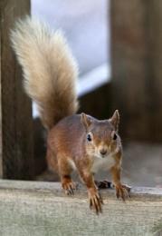 Bird Squirrel