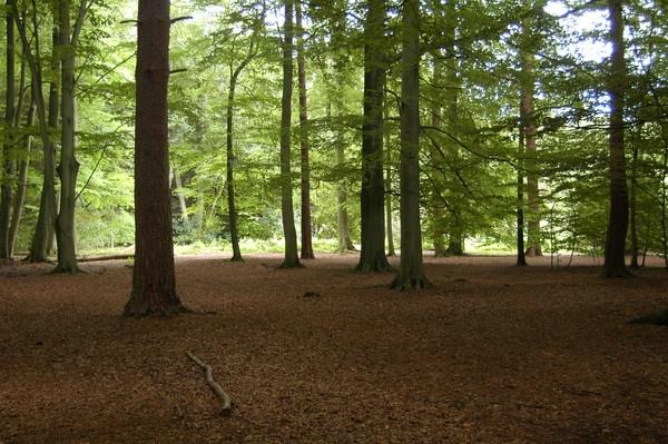 Woodland View by jasongoodman
