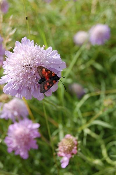 Butterfly by borrower