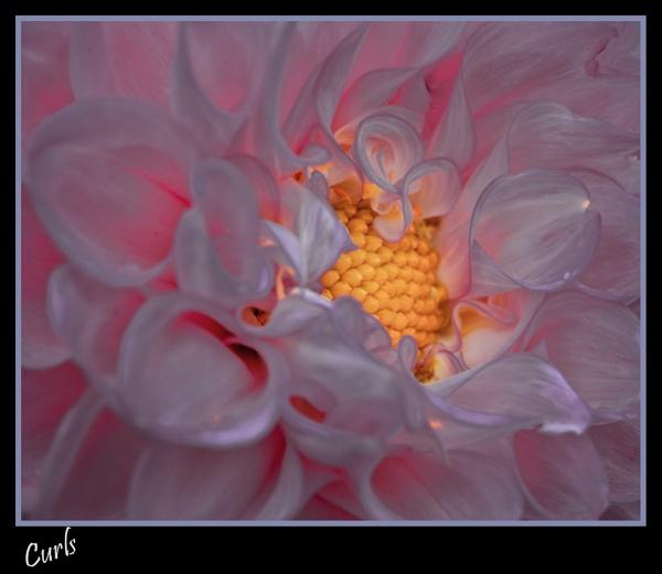 Luminous Petals by stomp