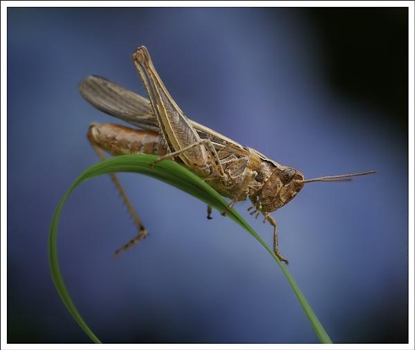 grasshopper by jacquienewsham