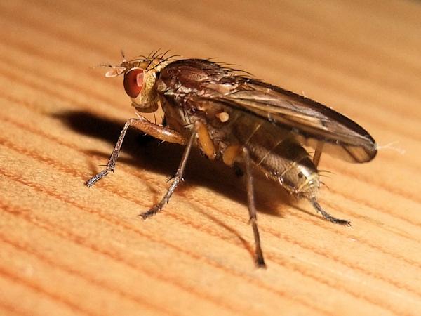 Fly macro by crashby