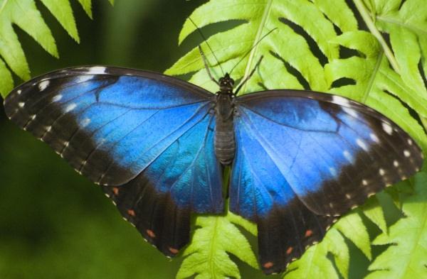 BLUE by dancingqueen