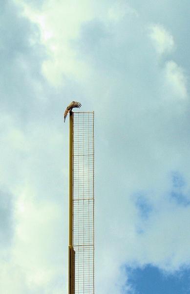 Foul Pole Eagle by chuckspics