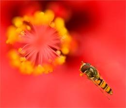 Buzz In