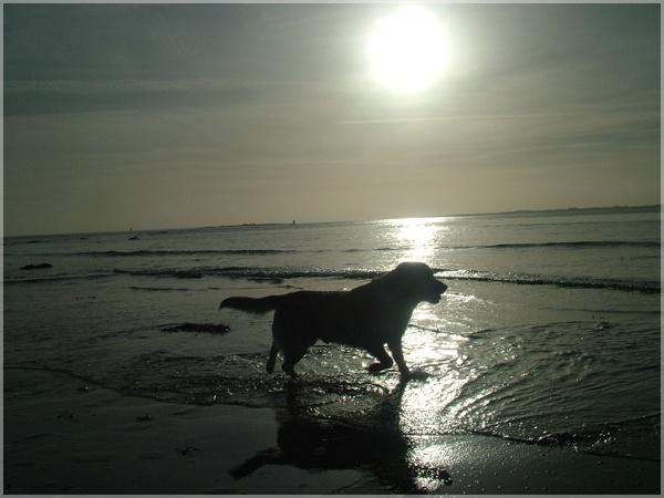 Shady Dog by Sconz
