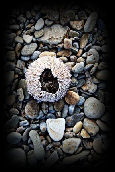 The Unlucky Urchin by gazb159