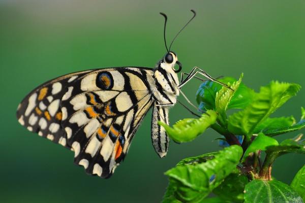 Butterfly In Garden by konu