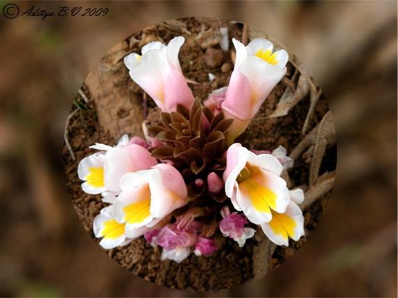 Flora.. by moonboyindia