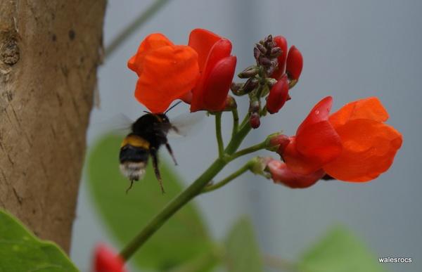 Pure Nectar by WalesRocs