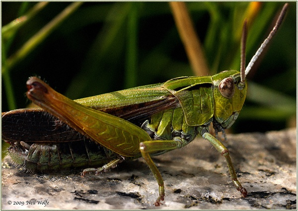 \'Ahh grasshopper!\' by lobo_blanco