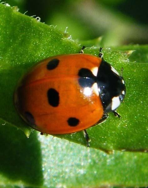 ladybird by fleetwoodflyers