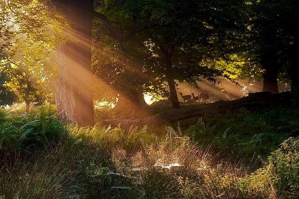 sunlight and deer by bridge99