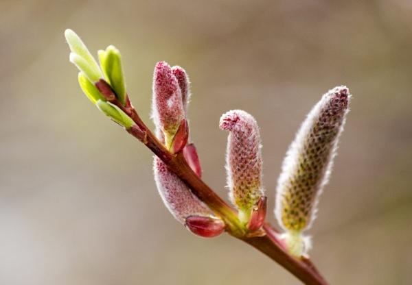 Spring Sprung by SosFM