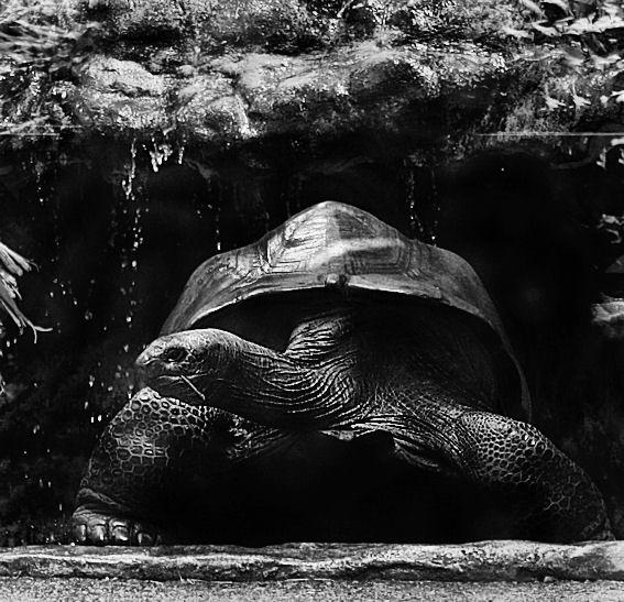 Tortoise by portia27493