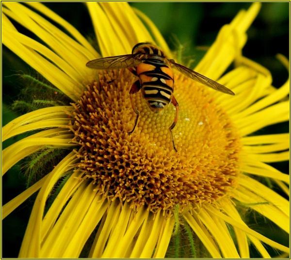 Stripey Bug Thingy by Neeka