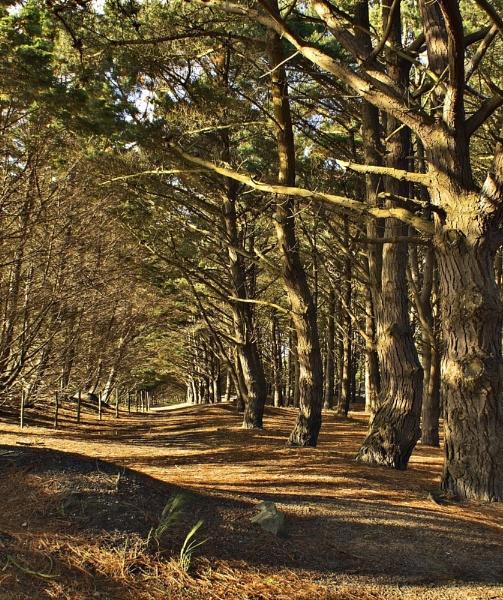 pine walk by crazyshutter