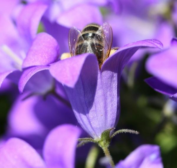 Bee-Hind by steve5452