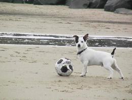 bobby on the beach