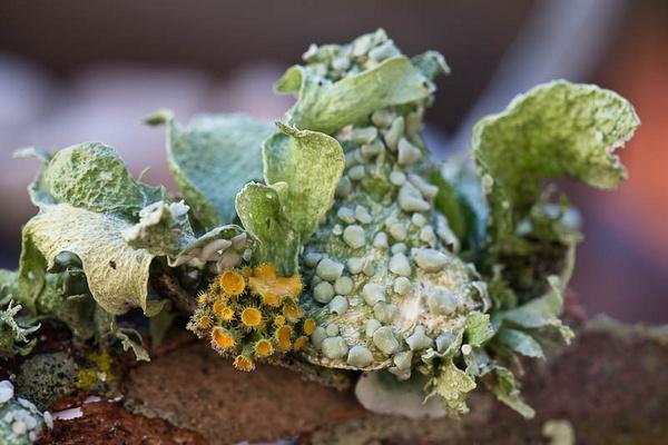 Lichen by JohanGrobbelaar