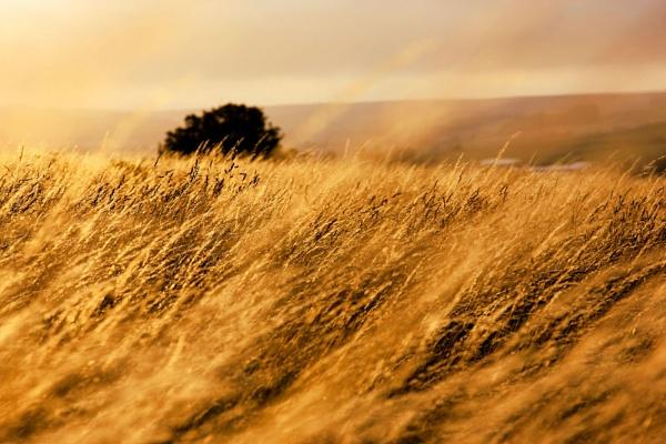 Cornfield by ITSJRW