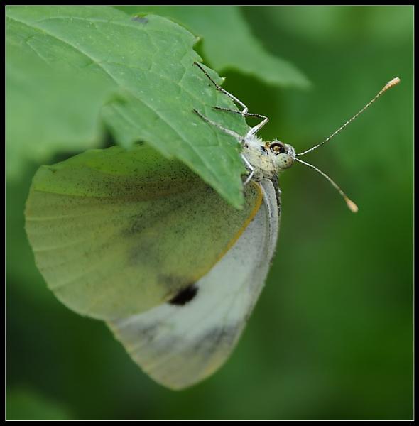 Butterfly by m3lem
