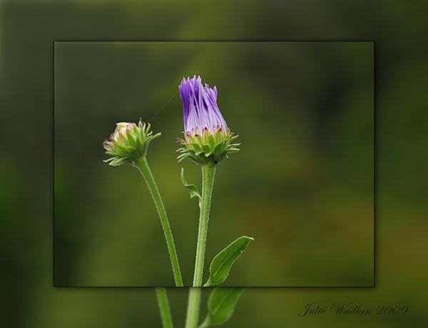 A little bud by jmw58