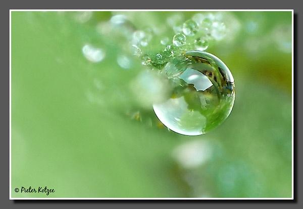 Dewdrop by Pieter_Kotzee
