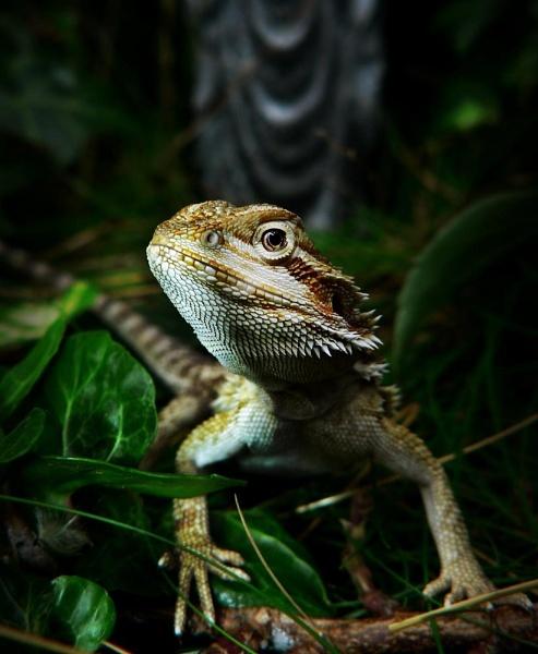 Jungle Dweller by imander