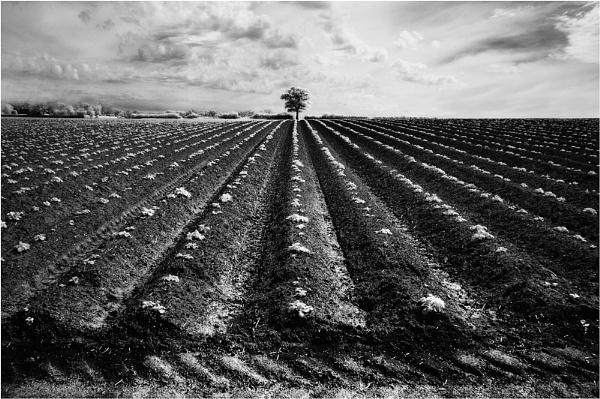 Furrowed Oak by dandeakin