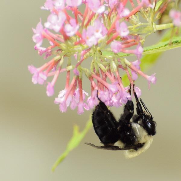 bee by WaltP