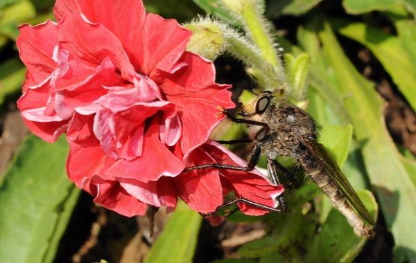 Bug? by WaltP