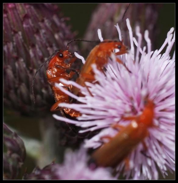 A Bug\'s Life by hellsbells8868