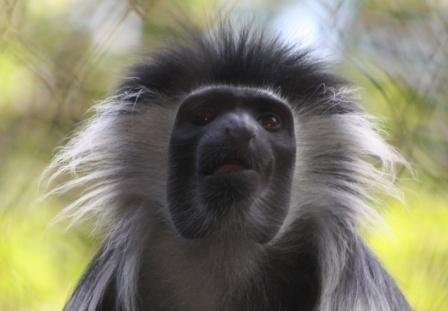 Monkey Buisness by k13wjd