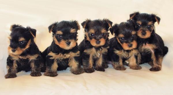 Tara & Toby\'s Pups by jackitec