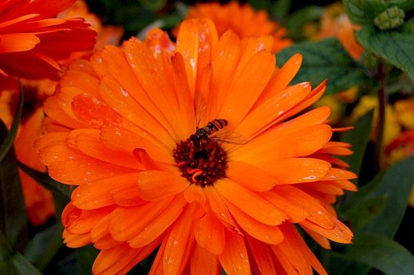 orange flower by geosami